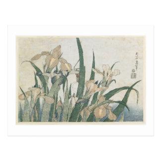 Carte Postale Fleurs d'iris et sauterelle, c.1830-31