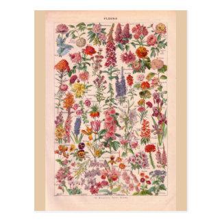 Carte Postale Fleurs historiques vintages