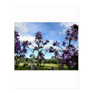Carte Postale fleurs organiques