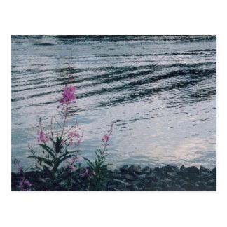 Carte Postale Fleurs sauvages Alaska