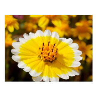 Carte Postale Fleurs sauvages de bout rangé