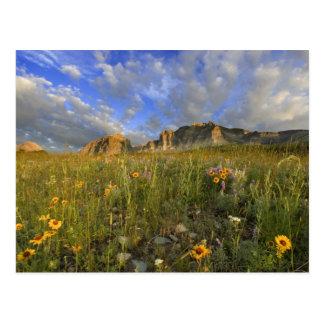 Carte Postale Fleurs sauvages de prairie à la crique venteuse