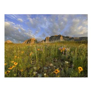 Carte Postale Fleurs sauvages de prairie dans les beaucoup