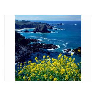 Carte Postale Fleurs sauvages Pacifiques Mendocino de littoral