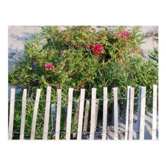 Carte Postale Fleurs sur des dunes