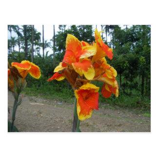 Carte Postale Fleurs sur des plantes, Costa Rica.