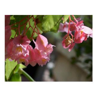 Carte postale florale de bégonias roses