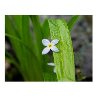 Carte postale florale de fleur sauvage de Bluet