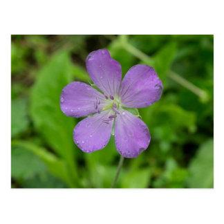 Carte postale florale de fleur sauvage de géranium