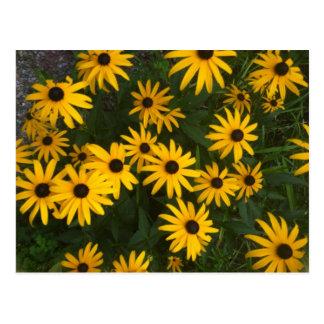 Carte Postale Flower power