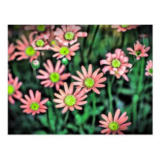 Carte Postale Flower revitalize