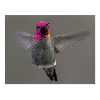 Carte Postale Flying Hummingbird