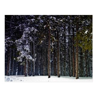Carte Postale forêt de pin avec la neige hiver-Chypre