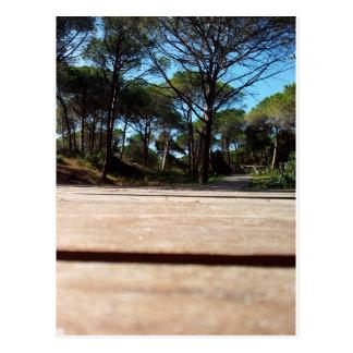 Carte Postale Forêt de pin parasol à la plage Alghero, Sardaigne
