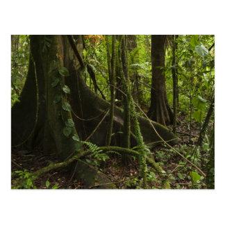 Carte Postale Forêt tropicale, rivière Rupununi du nord de