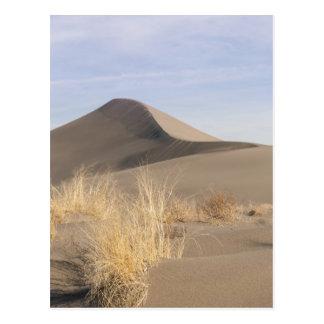 Carte Postale Formations de dune de sable. Parc d'état de dunes