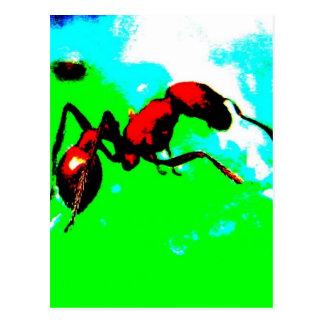 Carte Postale fourmi