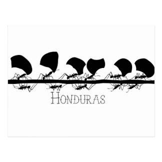 Carte Postale Fourmis Honduras de Leafcutter