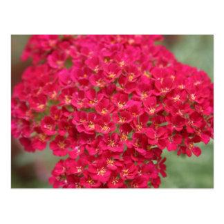 Carte postale Framboise-Colorée de fleurs