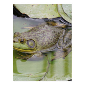 Carte Postale Froggy