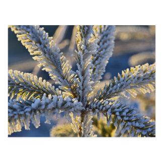 Carte Postale Frost sur l'arbre à feuillage persistant, Homer,
