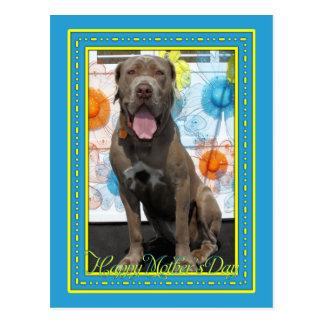 Carte Postale Fureteur - mastiff -3F de Neopolitan