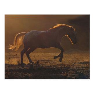 Carte postale galopante de cheval avec l'éclairage