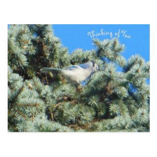 Carte Postale Geai bleu pensant à vous