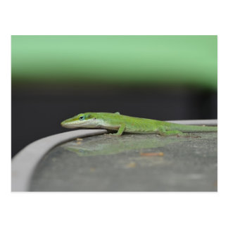 Carte Postale Gecko 9