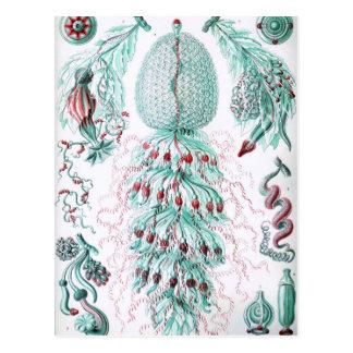 Carte Postale Gelée Cru-Ernst-Haeckels-Kunstformen-Bleue