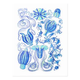 Carte Postale Gelées de peigne