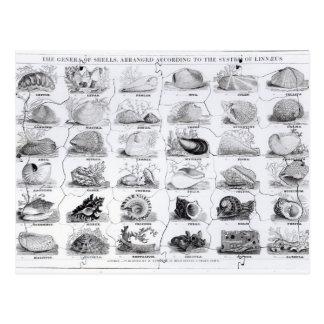 Carte Postale Genres de puzzle de coquilles, pub. par W. Edwards
