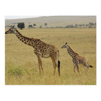 Carte Postale Girafe de masai de mère et de bébé, Giraffa 2