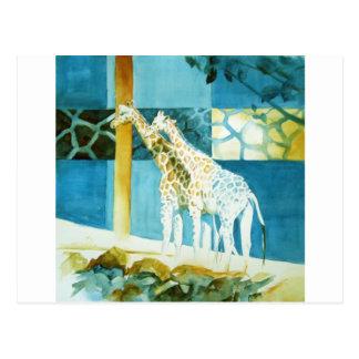 Carte Postale Girafes