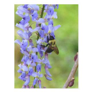 Carte Postale Glycines et une abeille