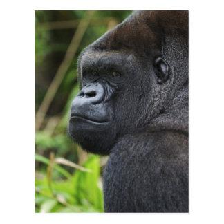 Carte Postale Gorille de plaine de Silverback, captif de gorille
