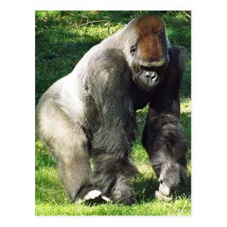 Carte Postale Gorille masculin de plaine de Silverback se levant
