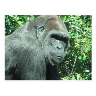 Carte Postale Gorille principal et d'épaule