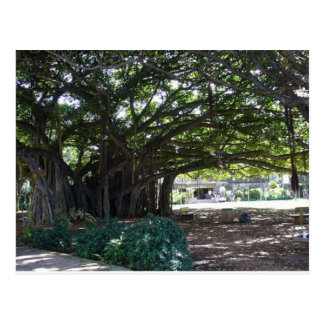 Carte Postale Grand arbre d'Hawaï - Honolulu
