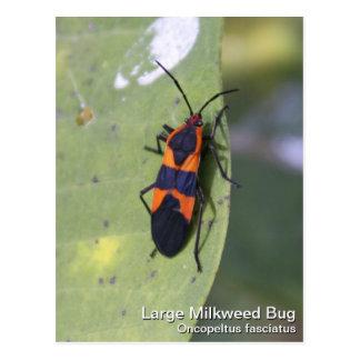 Carte Postale Grand insecte de Milkweed