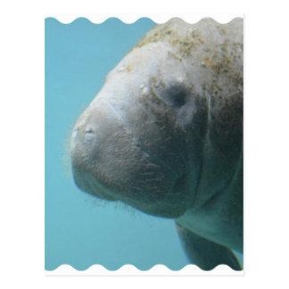 Carte Postale Grand lamantin sous-marin