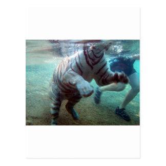 Carte Postale Grand tigre d'aventure