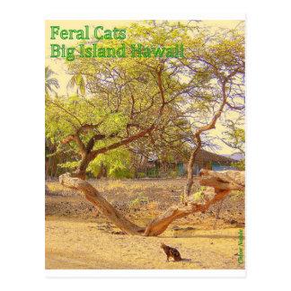 Carte Postale Grande île Hawaï de chats sauvages
