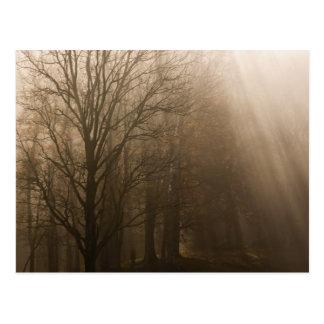 Carte Postale Grands arbres du NP Tennessee de montagne fumeuse