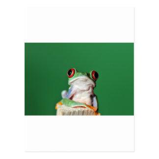 Carte Postale grenouille d'arbre observée par rouge