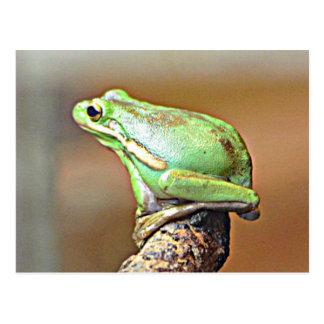 Carte Postale Grenouille d'arbre verte de la Louisiane