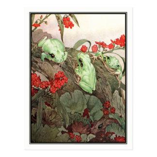 Carte Postale Grenouilles d'arbre vertes par E.J. Detmold