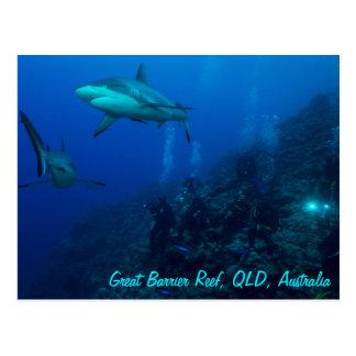 Carte postale grise de requin de récif