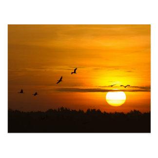 Carte Postale Grues au lever de soleil