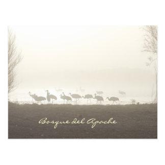 Carte Postale Grues dans la brume Bosque del Apache